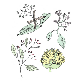angostura bitters botanical drawing
