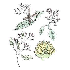 angostura bitters botanical drawing