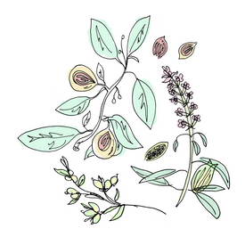 chartreuse botanical drawing