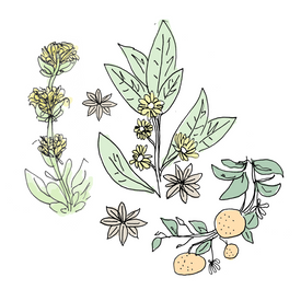 peychaud's bitters botanical drawing